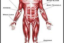 Anatomia do Jiu Jitsu