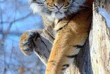 Charming animals