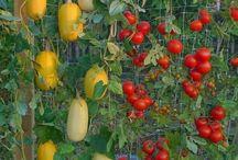 Eating local - Garden ideas