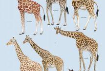 Interesting animal stuff