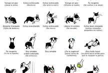 my dog ❤
