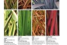 Tenax Plants