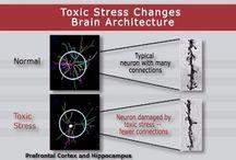 Brain development/executive function
