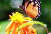 Birds, Butterflies & Bees / Photos and information about the winged friends that visit our gardens.