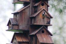 Birds and Barns