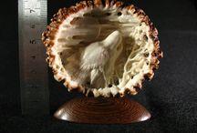 sculture su corna