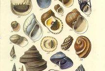 Creations of The Earths Ocean / Sea Life, Shells, Beach Glass & Treasures