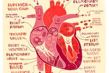 Funny anatomy