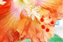 Fotos minhas - Flores / Minhas fotografias