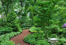 woodland backyard