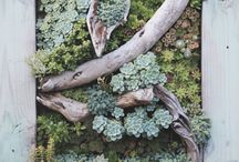 Succulent - Inspiration