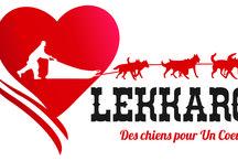 Lekkarod 2016 / Première édition de Lekkarod, course internationale de traineaux à chiens par étapes. Bessans-Bonneval, Valloire-Galibier, Les Saisies (Savoie) du 23 au 31 janvier 2016. Photos du Team images Lekkarod 2016
