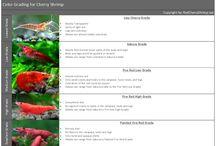 Aquarium:- Shrimpies, Info