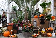 Halloween 2017 / Halloween 2017 at Clifton Nurseries London and inspiring Spooky Combinations we love!