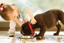 Halal Pet Food / Studies have shown that special collagen peptides are excellent nutritional supplements for age- and mechanical stress-related wear and tear symptoms of joints in horses, dogs and cats.