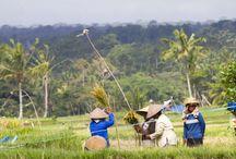 Bali indonesië / In 2012 zijn we naar Bali geweest. We hebben een rondreis gemaakt met onze geweldige chauffeur Putu. Van Ubud naar Candidase, vervolgens via Lovina naar Pembuteran en daarna naar Seminyak. De mensen waren super lief, we hebben heerlijk gegeten. De hotels waren goed. Kortom zou het zo weer doen.