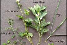 Create Nitrogen-Lets Talk Cover Crops