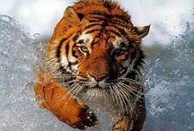 Tiger, Löwen & Co.