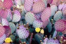 Flowers \ Nature