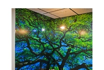 """""""Pin a Mural Win a Mural"""" / Competition being held by Murals Your Way.  You can pin a dream room and enter if you like.  Search for """"Murals Your Way"""" on Pinterest and follow them.  You'll find contest directions on their board."""