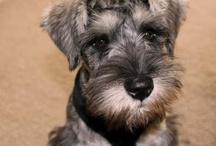 Puppy love / by Ashley Hintze