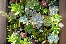 jardin colgante