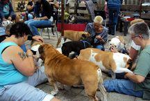 Bullen knuffeldag / Bullen knuffeldag een jaarlijks gezellig samen zijn met de baasjes en de bullen