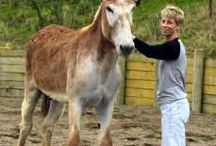 donkey and carts