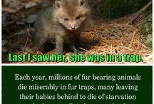 Sad and animal