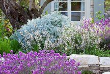 Jardines mediterráneos / Jardines, especies e ideas decorativas para zona mediterránea
