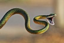Snakes <3