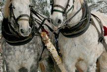 horses covers