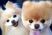 PHOTOS-Animals / Lovely beauties...