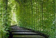 bitki tüneli