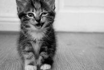 Feline Mania / Don't judge. / by Rachel Troutman