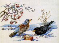 zima - ptáci