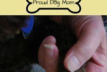 clip dog nail's