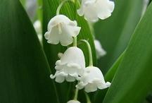 Blumen - flowers - stories / Sag es durch die Blume