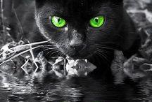 kočky / a vše co s nimi souvisí