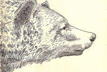 Illustrations / by Nicky Dewar