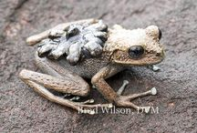 Weird and wonderful Frogs and Toads