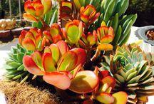 cactus love of