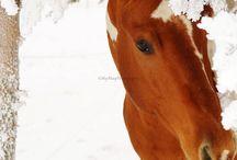 Horses  / by Sandra Rea