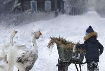 Kış - Winter