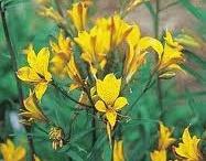 Snijbloemen  voor de pluktuin