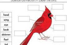 Bird unit