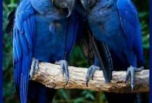 « Birds » / by Mariam Khanji Atif