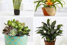 piante int