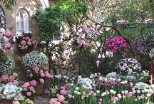 Gardens and Landscape architecture