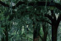 Savannah, GA / by Bridget Gilbert
